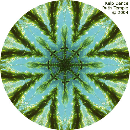 dancing kelp